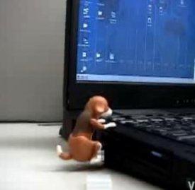 keyboardhumpusb.jpg