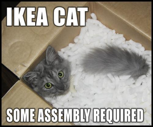 ikea-cat-some-assembly-required.jpg