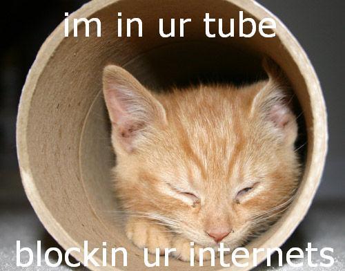 Tube kitten.jpg