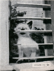MM-cat_photos_clip.jpg